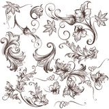 Collection of vector hand drawn swirls. Collection of vector hand drawn floral swirls Stock Photo