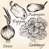 Collection of vector hand drawn vegetables for design Royalty Free Stock Images