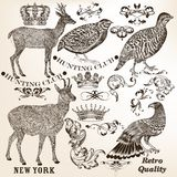 Collection of vector hand drawn vintage elements Royalty Free Stock Images