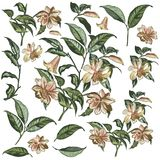 Collection of vector high detailed hand drawn flowers for design royalty free illustration