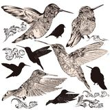 Collection of vector high detailed humming birds. Vector set of detailed hand drawn birds for design Stock Photos