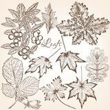 Collection of vector high detailed leafs for floral design Royalty Free Stock Photos