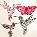Collection of vector  hummingbirds from ornament Stock Images