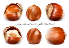 Collection of vector illustrations hazelnuts Royalty Free Stock Photos
