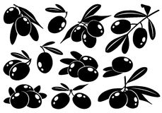 Collection of vector monochrome olives Royalty Free Stock Photo