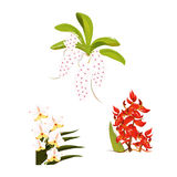 Collection of Vector orchid 02. This Vector of Orchid to useed with you work Stock Images