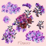Collection of vector pink and purple flowers. For design Royalty Free Stock Image