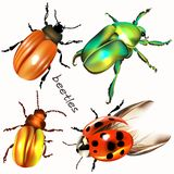 Collection of vector realistic colorful beetles for design Stock Photo