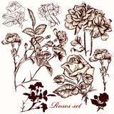 Collection of vector roses Royalty Free Stock Photo