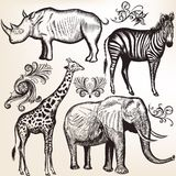 Collection of vector savanna animals Royalty Free Stock Photos