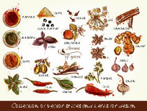 Collection of vector spices and herbs for design Stock Photo