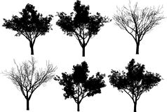 Collection vector trees Stock Photos