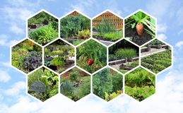Collection of vegetable gardens. Stock Images