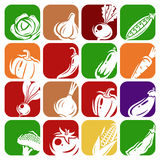 Collection of vegetables set. Vector illustration. Icons design Vector Illustration