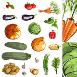 Collection verte de légumes frais Photo stock