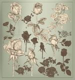 Collection  of  vintage hand drawn roses for design. Set of  detailed hand drawn roses. Floral vintage Stock Photo
