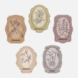 Collection of vintage storage labels with herbs and spices. Royalty Free Stock Photos