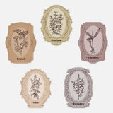 Collection of vintage storage labels with herbs and spices. Stock Image