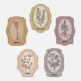 Collection of vintage storage labels with herbs and spices. Royalty Free Stock Photo