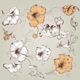 Collection of vintage vector floral elements for design Royalty Free Stock Photo