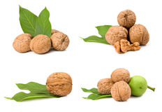 Collection of walnuts. Isolated on white background Royalty Free Stock Photos