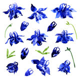 Collection of watercolor aquilegia flowers Stock Photo