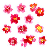 Collection of watercolor camellia flowers Stock Photography