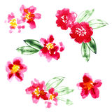 Collection of watercolor camellia flowers Royalty Free Stock Photos