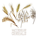 Collection of watercolor cereals Stock Photos