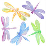 Collection of watercolor dragonflies. Stock Image