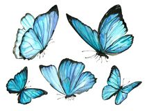 Collection watercolor of flying blue butterflies. Collection of watercolor images of beautiful butterflies. A set of illustrations of an insect. Hand drawing stock illustration