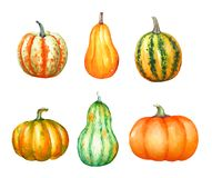 A collection of watercolor hand drawn colorful pumpkins. Isolated on white background vector illustration