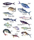 Collection of watercolor hand drawn fish Stock Photo