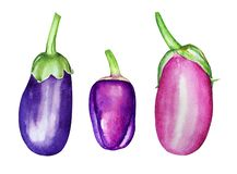 A collection of watercolor hand drawn purple vegetables Stock Photo