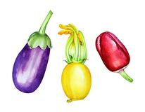 A collection of watercolor hand drawn vegetables Stock Image