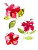 Collection of watercolor hibiscus flowers Royalty Free Stock Photo