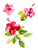 Collection of watercolor hibiscus flowers Stock Photography