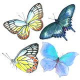 Collection of watercolor images of beautiful butterflies. A set of illustrations of an insect. Hand drawing. Isolated Clipart vector illustration