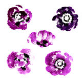 Collection of watercolor poppy flowers Royalty Free Stock Image
