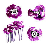 Collection of watercolor poppy flowers Stock Image