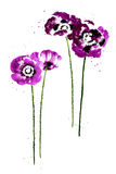 Collection of watercolor poppy flowers Royalty Free Stock Images
