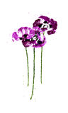 Collection of watercolor poppy flowers Royalty Free Stock Photos