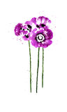 Collection of watercolor poppy flowers Stock Photos