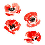 Collection of watercolor poppy flowers Stock Images