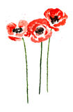 Collection of watercolor poppy flowers Stock Photo