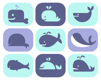 Collection of Whale Icons. And illustrations Royalty Free Stock Images