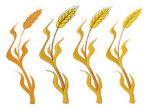 Collection wheat Stock Images