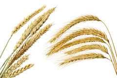 Collection of wheat ears Stock Image