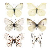 Collection white butterfly. Collection of white butterfly isolated on white background Stock Photography