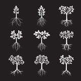 Collection of White Trees and Roots. Vector Illustration. Royalty Free Stock Image